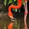 flamingo5