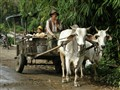 indo20100726-0194e