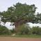 01-30-27 Baobab et Maëlle