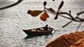 Port stanley fisherwoman HK
