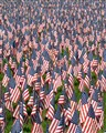 Field of Flags Vertical