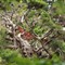 Hakone Gardens with Oly OM50mm 1.4