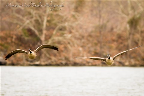 -13_March_river birds_433