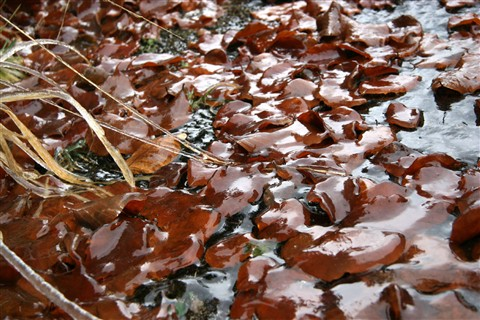 Leaf litter in winter