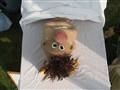 2006-06 Scarecrow 02