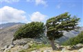 Wind versus Trees... who won ?