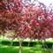 Spring red green