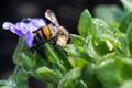Shiny bee