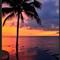sunset_palm_3 copy