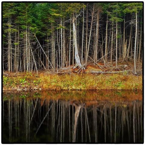 Tranquille automne