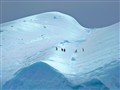 Chinstrap Penguins On Antarctic Iceberg