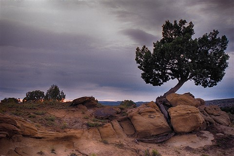ArizonaLoneTreeInSunsetCropped_IIColorHdr