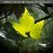 lit-leaf-0476