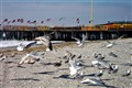 Atlantic City Gulls