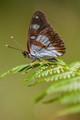 butterfly&fern