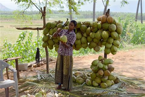 coconutawomen