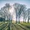 Trees in winter sunlight