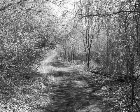 Woodland scene michigan