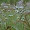 Wet Field_sm
