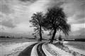 Footprints of winter