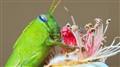 Greenhopper