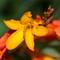 Garden macros 20130903 0005