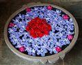 Templeflowers