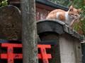 Kyoto: Cat at Fushimi Inari Temple