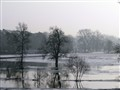Frozen lake of Rogalin/Poland