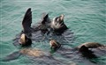 Sea lions playing time