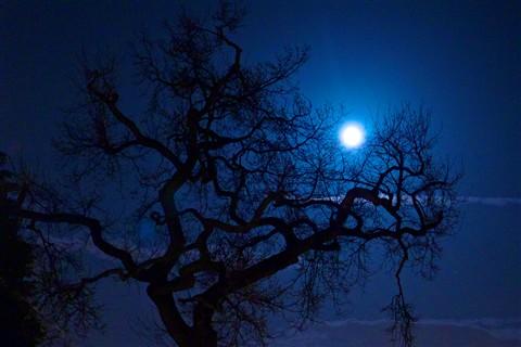 Moon Tree 01 1400px