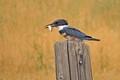 2013-08-08 GSL Wetlands 075a