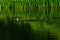 ----the GREEN REFLECTION----