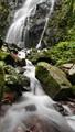 Black Forest Creek