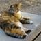 Cleo on steps 1