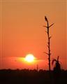 sunset_overviera