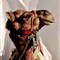 Ashura Camel