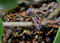 The secret world of wasps