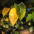 Yellow and Green at Westonbirt