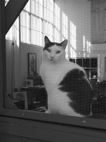 Screen Cat