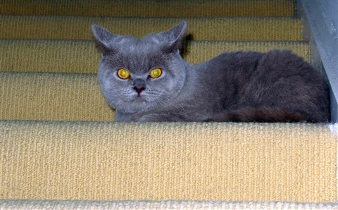 Guarding the stairs