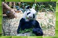 Bamboo is Yummy!
