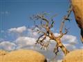 Skull Rock Tree
