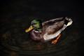 Duck's Diavolo