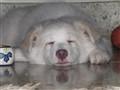 Kia Sleeping