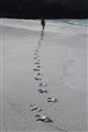 Footsteps along the beach