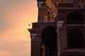 Taking Flight at the Colosseum (shot June 19)