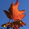 PA_Home_VineMapleLeaf_1XS_100317_85_11_900px_reduced