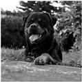 My dog Augustus.