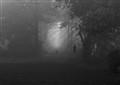 hond in de mist